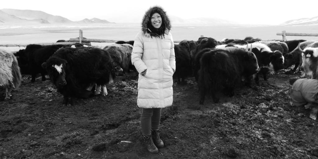 Nancy Johnston_yak farm in Mongolia