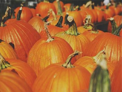 pumpkins featured